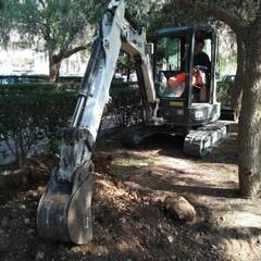nuova pubblica illuminazione in tutti i Municipi lavori giardino Amprino