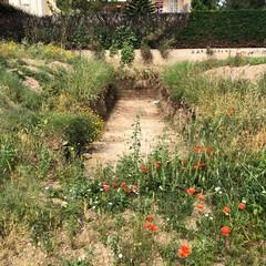 oggi il sopralluogo dellass galasso sul cantiere del giardino Manzari a Ceglie