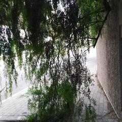 albero oltre il muro del cimitero
