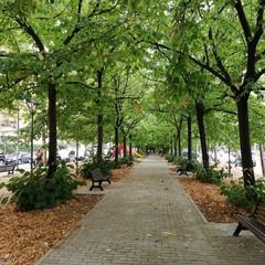 Il giardino di viale Kennedy