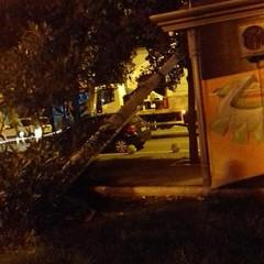 lampione caduto in piazza umberto