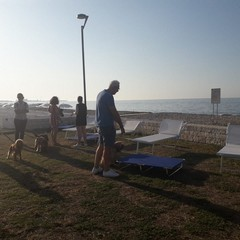 la spiaggia dog friendly a torre quetta