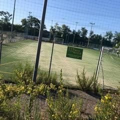 campo sportivo mungivacca
