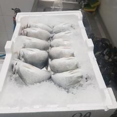 Il pesce sequestrato