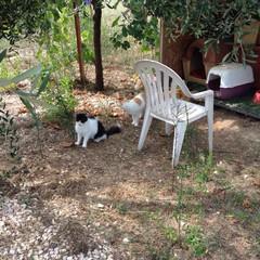L'oasi felina