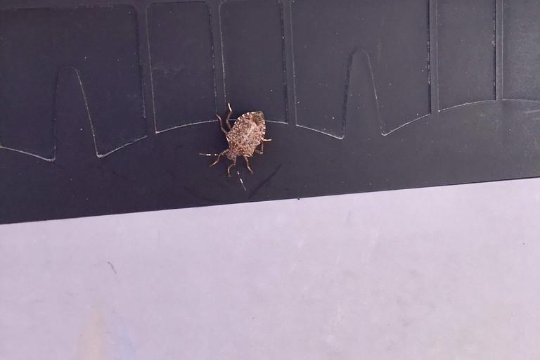 Gli insetti a Japigia