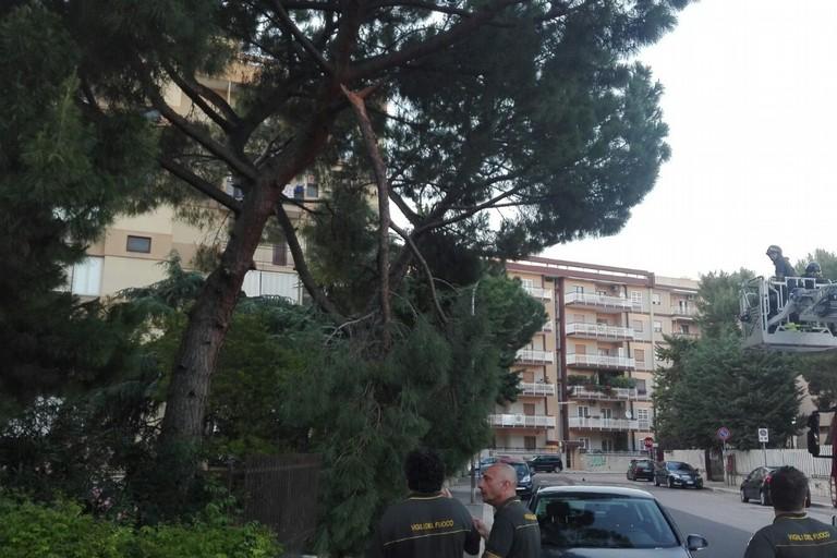 Bari, si stacca un grosso ramo da un albero a Poggiofranco. Non ci sono feriti