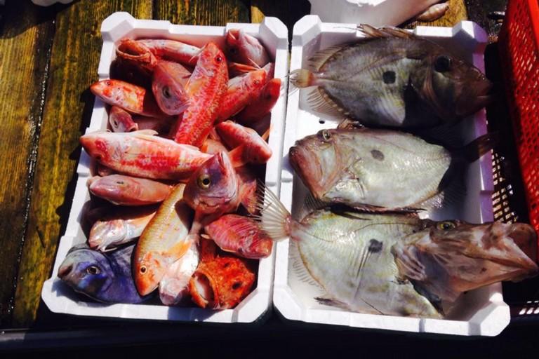Pesce pescato. <span>Foto Federpesca</span>