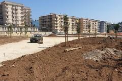 Nella ex Rossani arrivano i primi venti alberi, Galasso: «Parco altamente sostenibile»