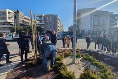 A Carbonara ci riprovano, ripiantato l'albero in via Vaccarella