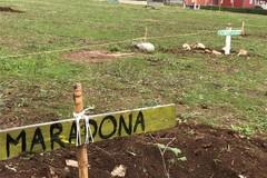 """San Paolo, riparte il """"bosco sociale"""" dopo il lockdown. Piantato un arbusto dedicato a Maradona"""