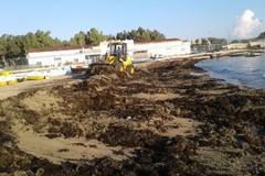 Bari, ripulita dalle alghe la spiaggia di lama San Giorgio