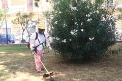 Bari, squadre della Multiservizi al lavoro per sfalcio e potatura alberi in parchi e giardini pubblici