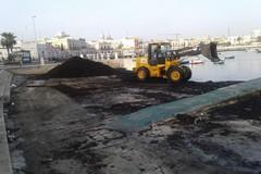 Ancora alghe raccolte sul Litorale di Bari, è la volta di Palese e Santo Spirito