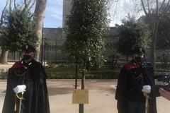 Bari, un albero in memoria di Giovanni Palatucci, ultimo questore di Fiume