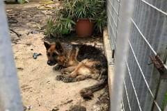 Cane rinchiuso sotto la pioggia senza cibo, tam tam via social lo salva