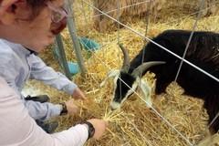 Agrilevante, boom di visitatori a Bari per la sesta edizione