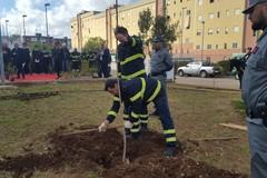 Giornata degli alberi, piantumati nuovi esemplari davanti alla chiesa San Giovanni Bosco e all'Urban Center