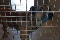 Troppi cani da gestire e pochi soldi, l'appello del Canile Sanitario di Bari