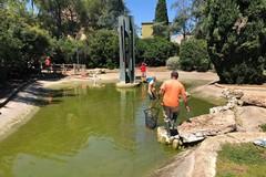 Tartarughe in fuga da parco Due Giugno, Galasso: «Tutto sotto controllo»