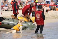 L'estate è finita ma le attività della Scuola Cani Salvataggio Nautico continuano