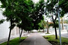 Via Caldarola a Bari, terminata la piantumazione di 115 alberi