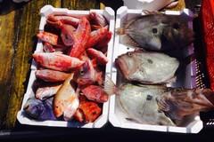 """Coldiretti Puglia """"Attenti a ciò che mangiate, 8 pesci su 10 vengono dall' estero"""""""