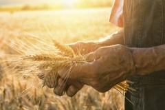Coronavirus e fase 2, l'accusa di Anp-Cia Puglia: «Bonus per tutti, tranne che per gli agricoltori»