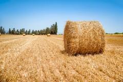 Puglia a rischio desertificazione, si perde un litro di acqua su due