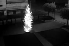 L'albero di Natale vandalizzato a Triggiano