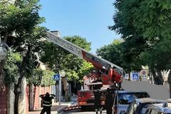 Palese, albero pericolante in via Vittorio Veneto. Strada chiusa al traffico