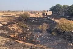 """Altamura, incendio distrugge il boschetto. La sindaca: """"Persone senza scrupoli"""""""