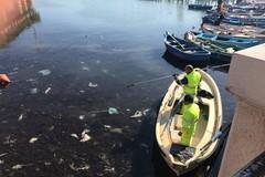 Bari, pulizia straordinaria del molo San Nicola. Raccolti 50 chili di rifiuti