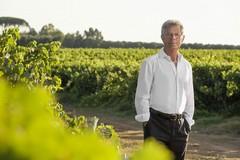 Vendemmia 2018, ecco come sarà il vino pugliese quest'anno