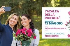 Festa della Mamma, anche a Bari in vendita le azalee della ricerca di Airc