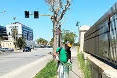 Bari, vie erbacce e piante infestanti dai marciapiedi del primo Municipio