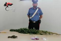 Coltiva marjuana in casa, arrestato 38enne a Bitritto (Bari)