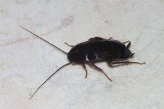 Bari, pronti gli interventi contro blatte, topi e zanzare: attiva l'ordinanza del sindaco