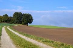 Occupazione in agricoltura, in Puglia in 5 anni più 6 percento