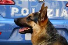 Bari, cani antidroga in azione sul lungomare: fermate tre persone