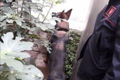 Japigia, scoperto dai cani carabinieri con 120 grammi di hashish. Arrestato 63enne