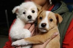 Coronavirus e abbandono degli animali, a Bari due cagnolini gettati nella spazzatura