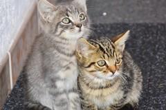 A Bari un corso per diventare tutori delle colonie feline