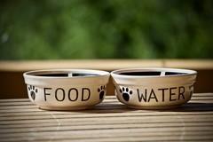 Qual è l'alimentazione migliore per il proprio cane?