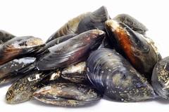 Cozze alla salmonella, rischi per chi le mangia crude