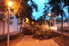 Forte vento su Bari, cadono alberi e vetri dal San Paolo al centro cittadino