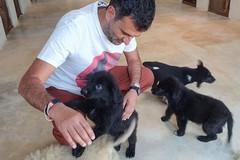 Canile sanitario di Bari, Decaro: «Due cuccioli cercano casa»