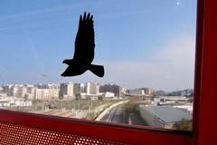 Ponte Adriatico, arrivano i dissuasori per evitare lo schianto degli uccelli