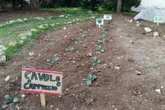 """""""Coltiviamocinsieme"""", ecco l'orto degli alunni della scuola Lombardi di Bari"""