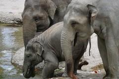 Elefanti a rischio estinzione, anche a Bari una giornata di sensibilizzazione